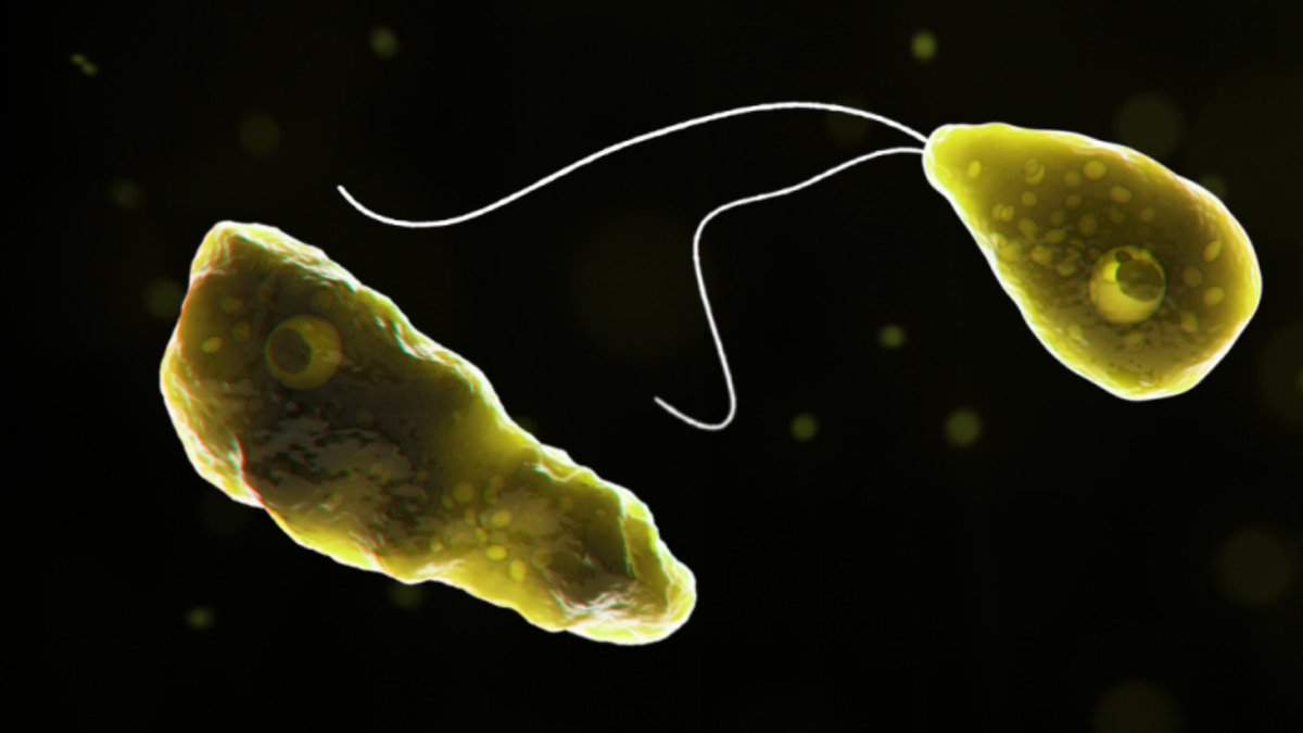 Brain-eating amoeba, Naegleria fowleri
