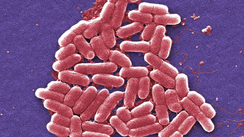The Centers for Disease Control and Prevention estimated about 36,000 Americans died from...