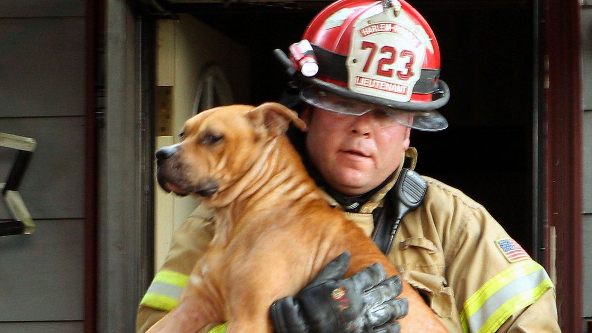 Harlem-Roscoe Fire Department Lieutenant Patrick Trollop carries a dog out of a house after...