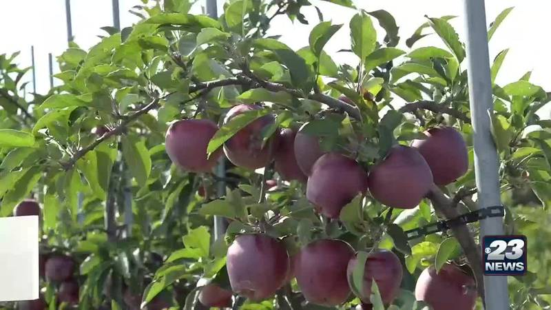 Local orchards deal with aftermath of hot, dry summer