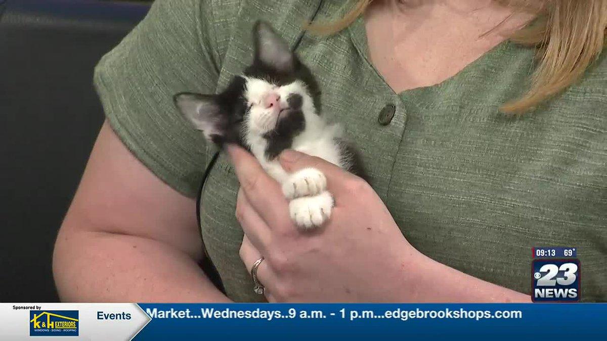 Pet of the week:  Sophia