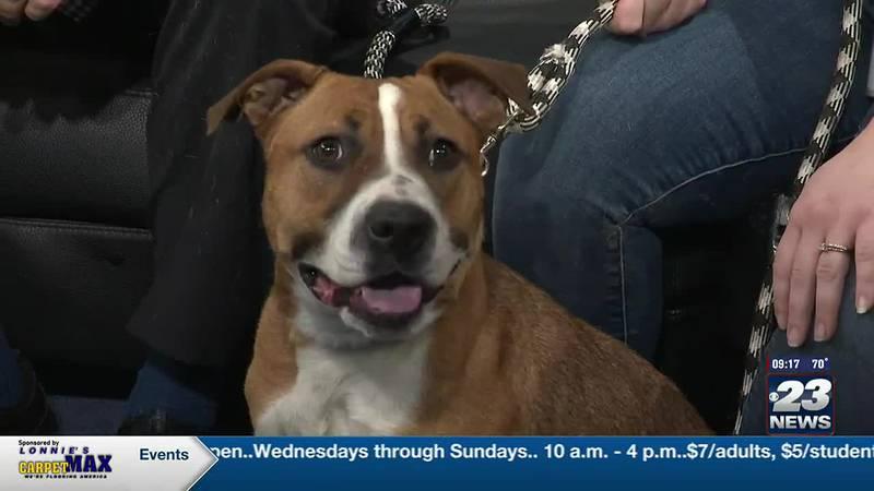 Pet of the Week: Zoey